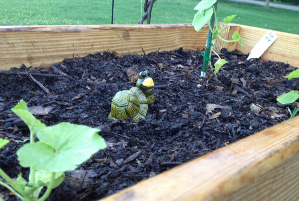 Garden2 turtle and plants May 2014 SNAG-0003