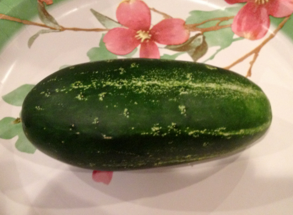 1st cucumber garden June 2014 SNAG-0008